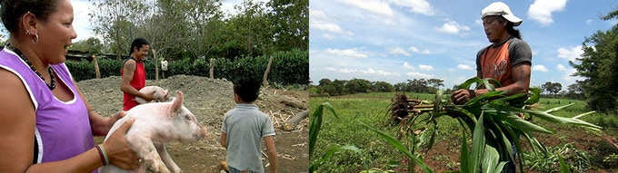 Life on the farm. L: Blanca carrying a pig; R: Javier (the father) harvesting corn