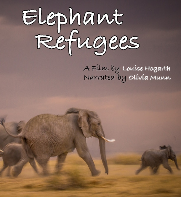 A documentary addressing the plight of wild elephants that have fled poachers in neighboring countries to safety in Botswana.