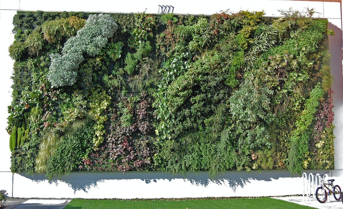 Inspiration: A living wall project in Wyoming, USA. Pledge to create our very own at Hinterlands