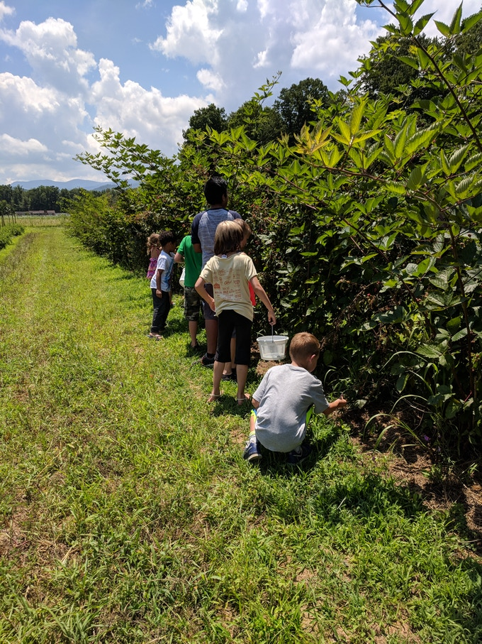 Kids from one of our local day camps picking blackberries. They come every summer!