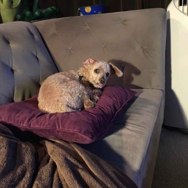 Tycho, the furry enigma