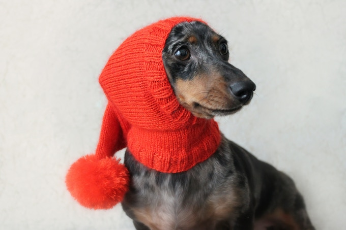 Knitting Pattern Series For Mini Dachshunds By Valya Boutenko