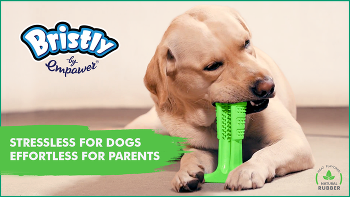 "First ever ""DIY"" toothbrush for dogs. 