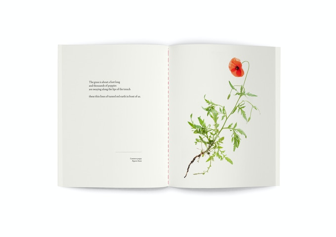 """Field poppy (also available as a 10x12"""" print and as part of the print set)"""