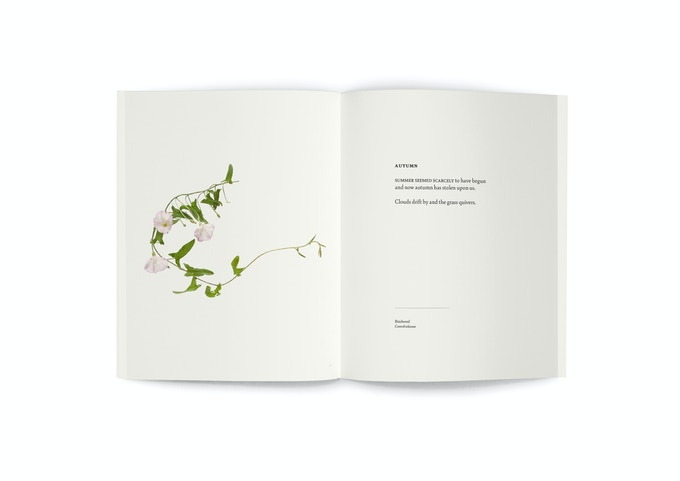 """Bindweed (also available as a 10x12"""" print)"""