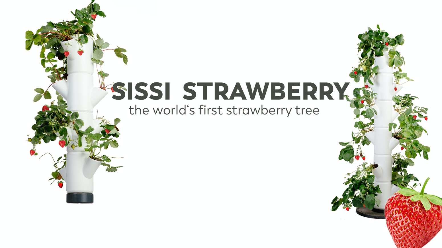 The easiest and most stylish way to grow your very own strawberries on your balcony or terrace.
