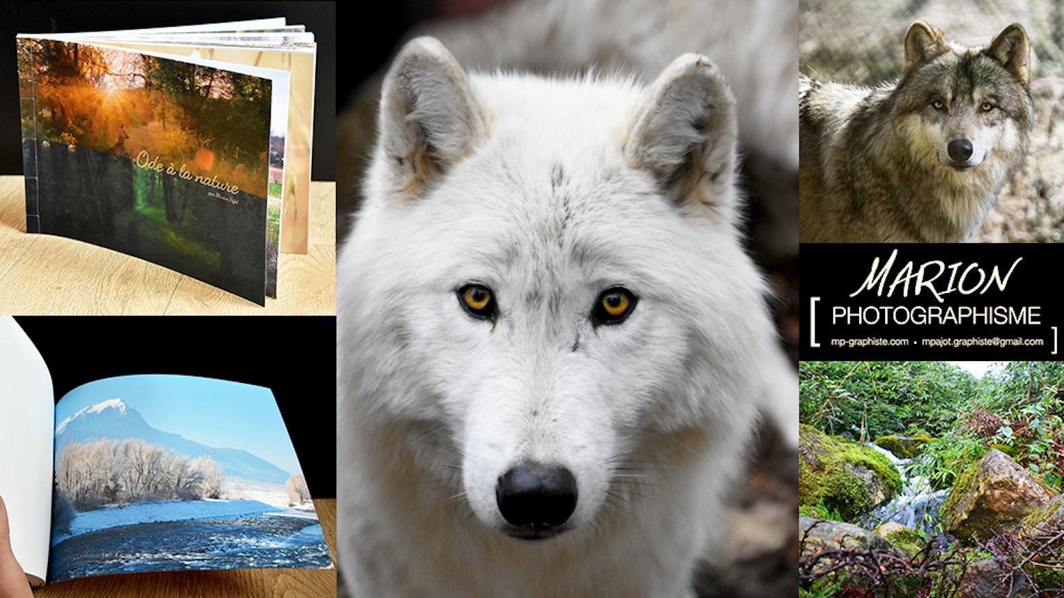Photographies Et Creation Livre D Art Sur La Beaute Du Loup