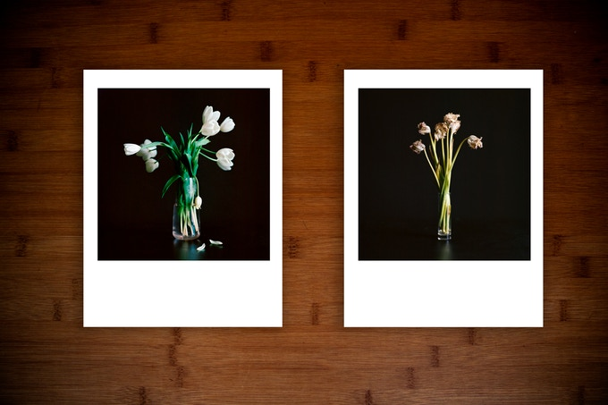 $100 Studio Flowers prints.
