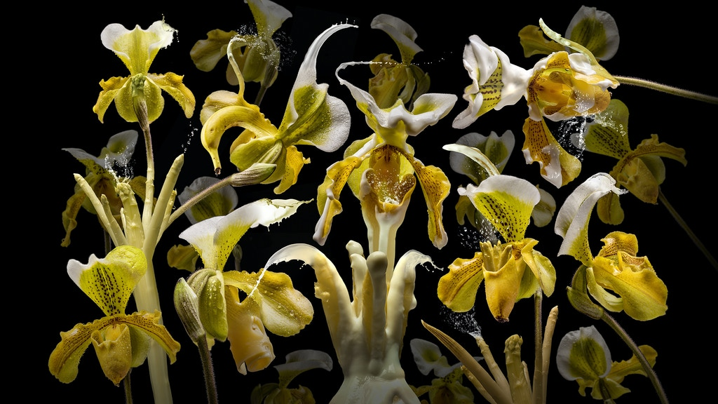 FLORA MIRACULA – an incredible photo calendar for 2019