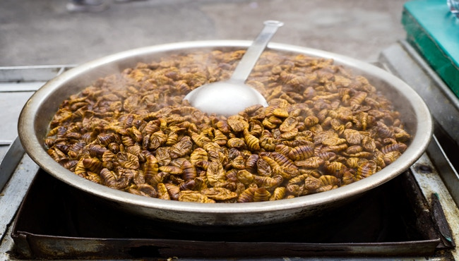 Would you eat some Beondegi? -A Korean food of Cooked Silkworms