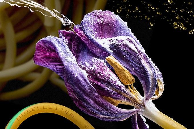 Tulipa Bucatina · 2018, 200 x 140 cm (Detail)