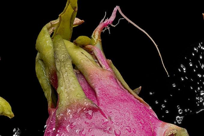 Pitaya dragona · 2018, 200 x 140 cm (Detail)