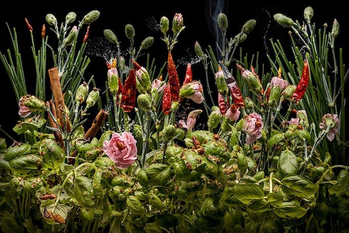 Dianthus aromaticus · 2018, 200 x 140 cm