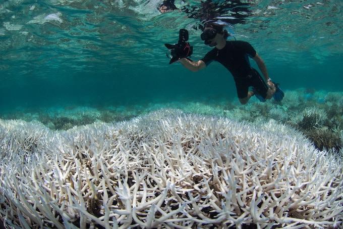 Photo credit: The Ocean Agency / XL Catlin Seaview Survey.