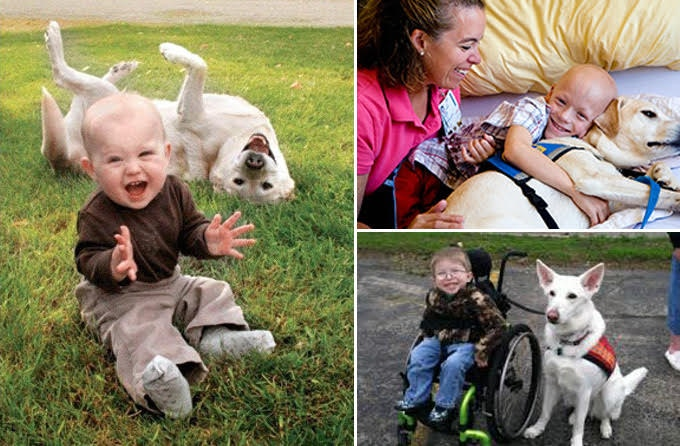 """If the service dog recipient is a small child, or is part of a household that includes a small child, this would be factored in as a relevant consideration in the """"matching"""" process. Different disabilities have distinct needs and service dogs are trained very specifically."""