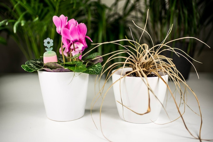 With PlantRay there will be no wilted plants anymore