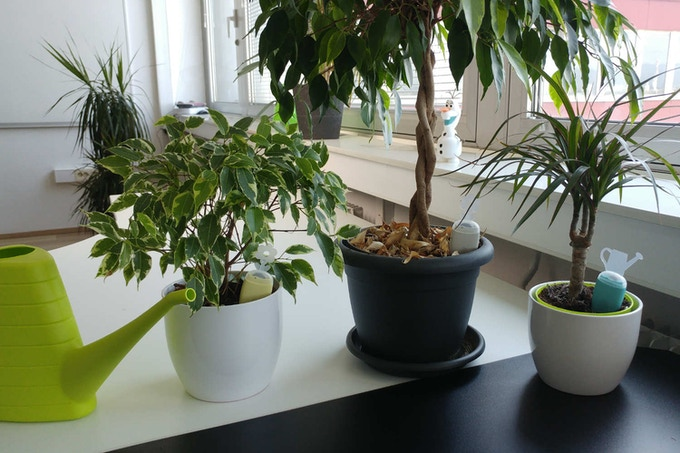With PlantRay everyone in the office will know the right time to water the plants