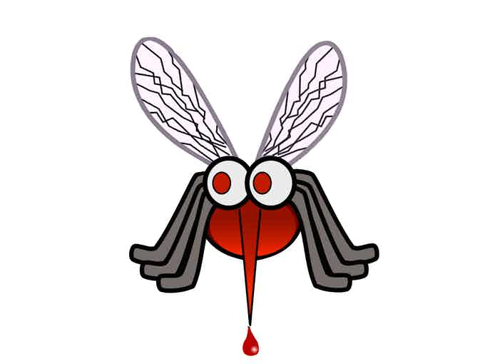 Mosquitoes can transmit diseases, such as Zika!
