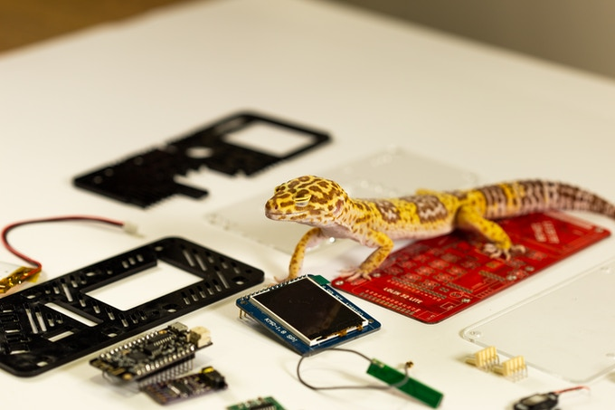 *disclaimer: lizard not included in the basic version of the kit