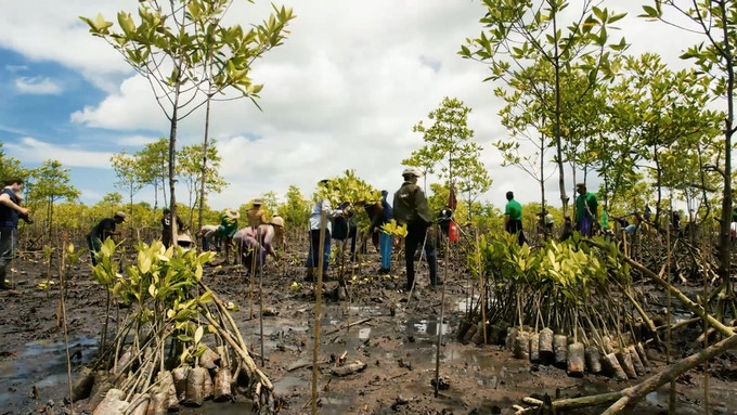 We will plant mangrove trees with World View International.