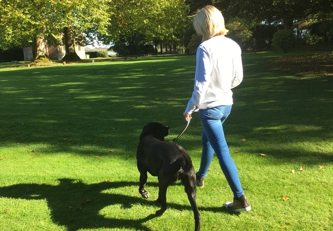 Use Petloc everyday to walk and tether your dog