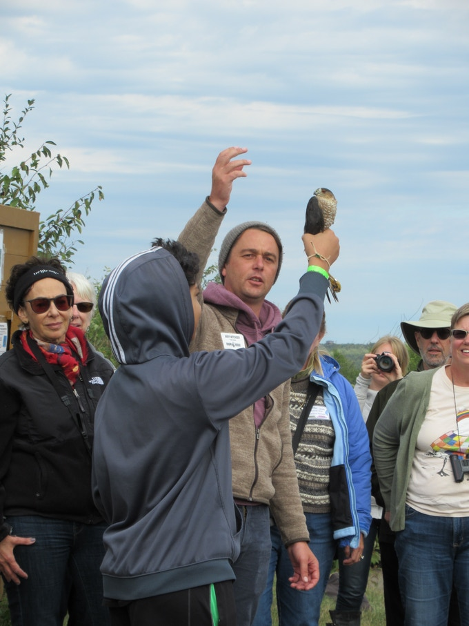 Naturalist Andy Witchger shows this youngster how to imitate The Statue of Liberty just before releasing an adult sharp-shinned hawk.