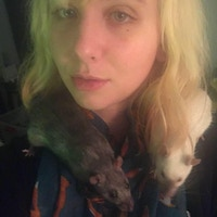 Tarot of the Rat by Sam Nelson » Update and Pippa — Kickstarter