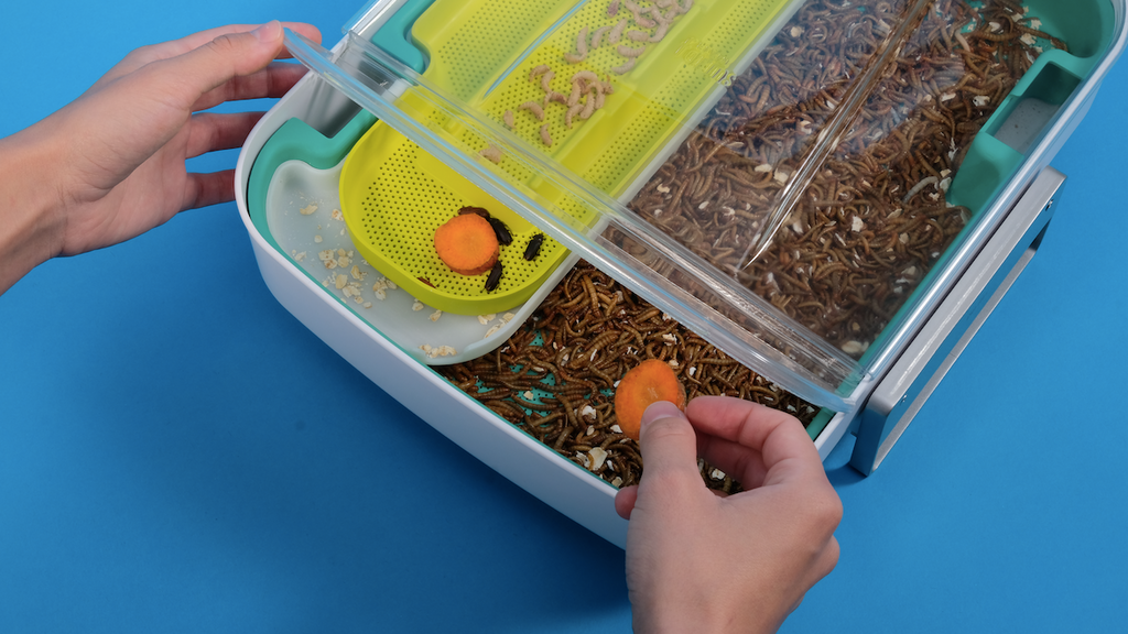 Hive Explorer | Smart Insect Farm for Upcycling Food Waste