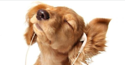 The effect of listening to music for pets