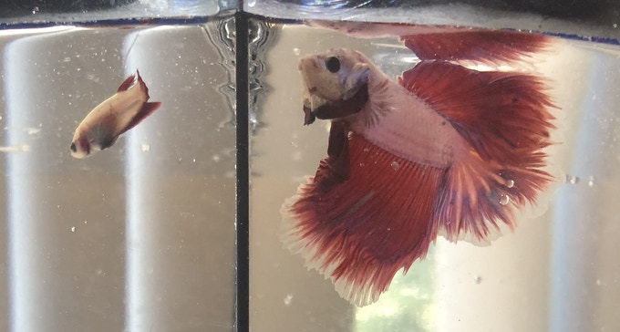 Desmond and Landen, the Finned part of the Furred & Finned Management.