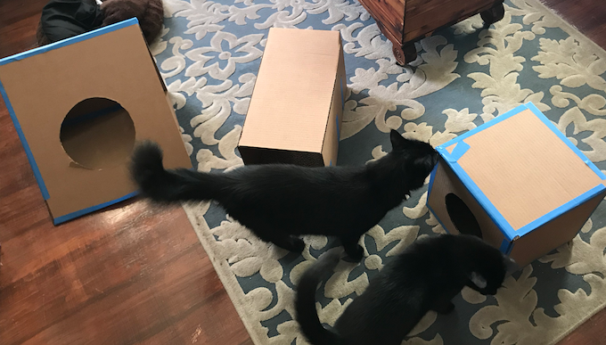 my cats Walter and Perry Alpha testing