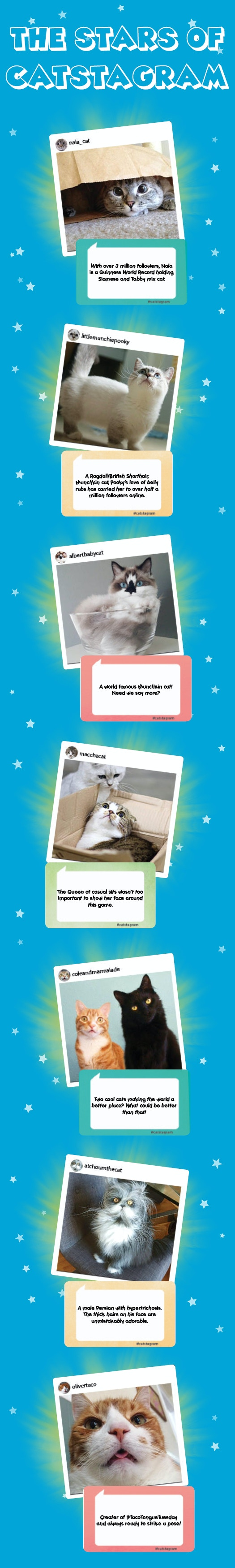 Many more celebri-kitties are really excited to be a part of the Catstagram game! Stay Tuned :3