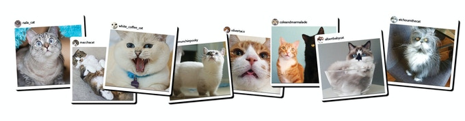 Over 100 Instagram Famous Cats including Nala Cat, Hosico, Lil Bunny Sue Roux, AlbertBabyCat, and so many more!