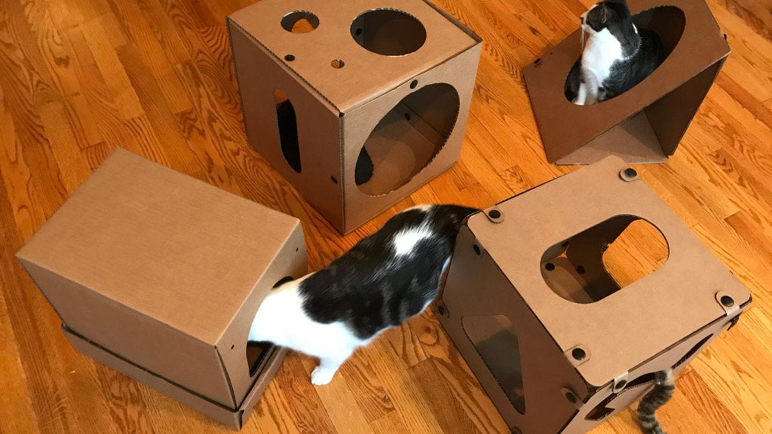 Become part of the community, helping test and design boxes with your cats, with the goal of helping animal shelters in Chicago.