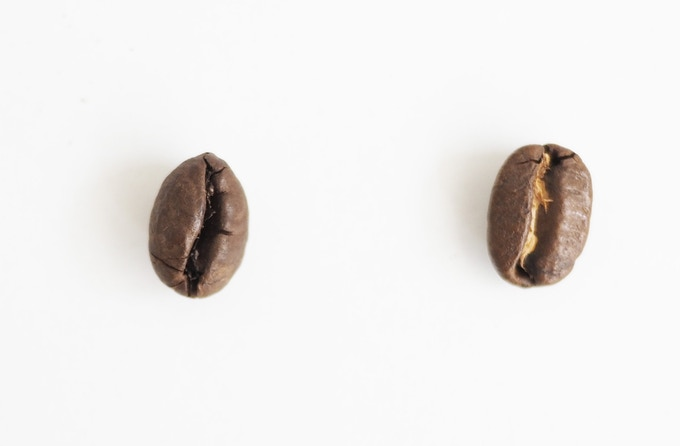 Comparison of the size of the beans