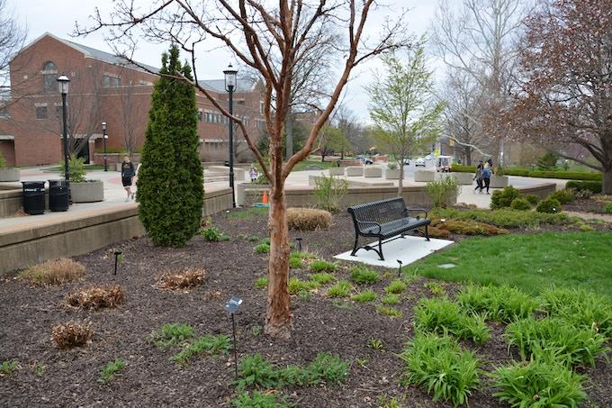 Tree #5 - Paperbark Maple