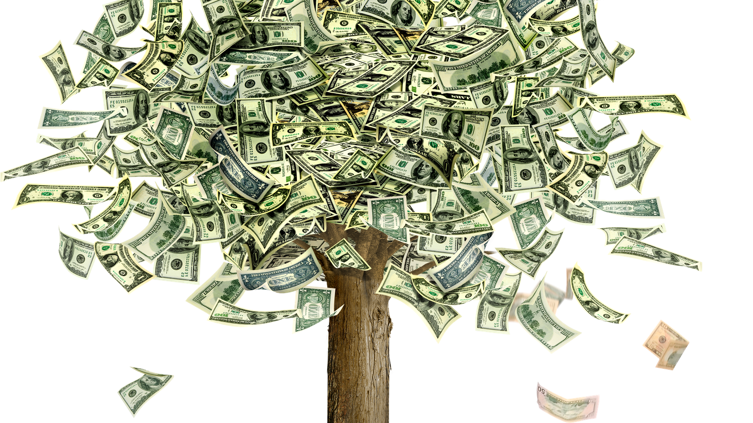 Money Doesn't Grow On Trees... Or Does It?! By Charlotte