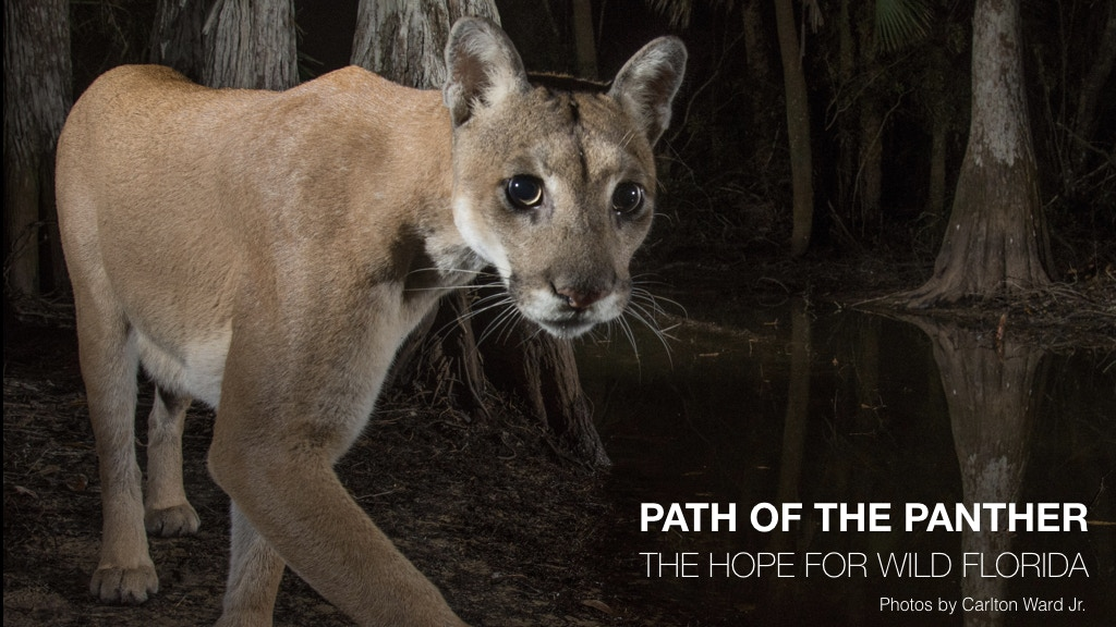 Path of the Panther project video thumbnail