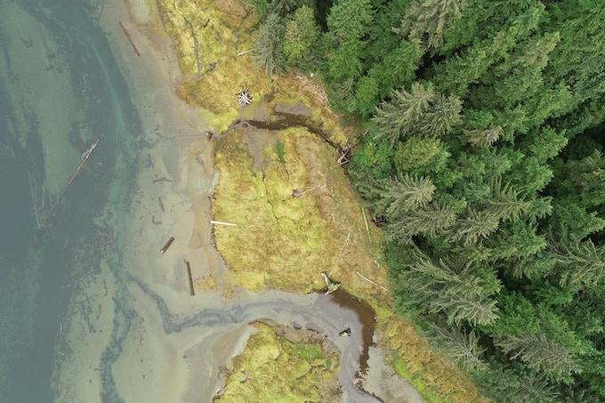An estuary in the Salish Sea