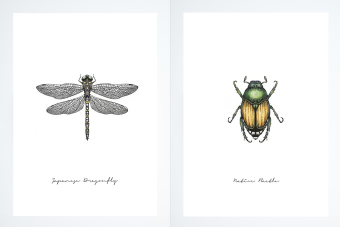 Illustrative Rewards #1 Dragonfly & #2 Beetle