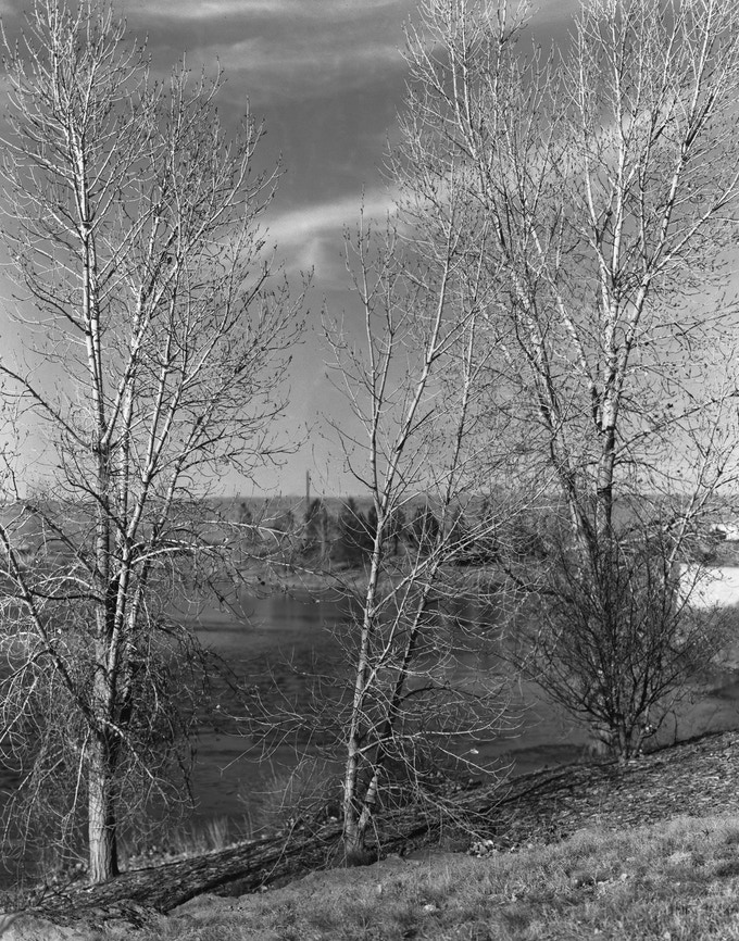 Three Trees, Anthem Colorado. Fomapan 400, SP-110EC.