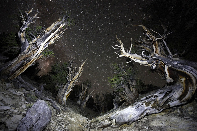 The oldest trees on the planet -- Bristlecone Pines! (just above the ESO!)