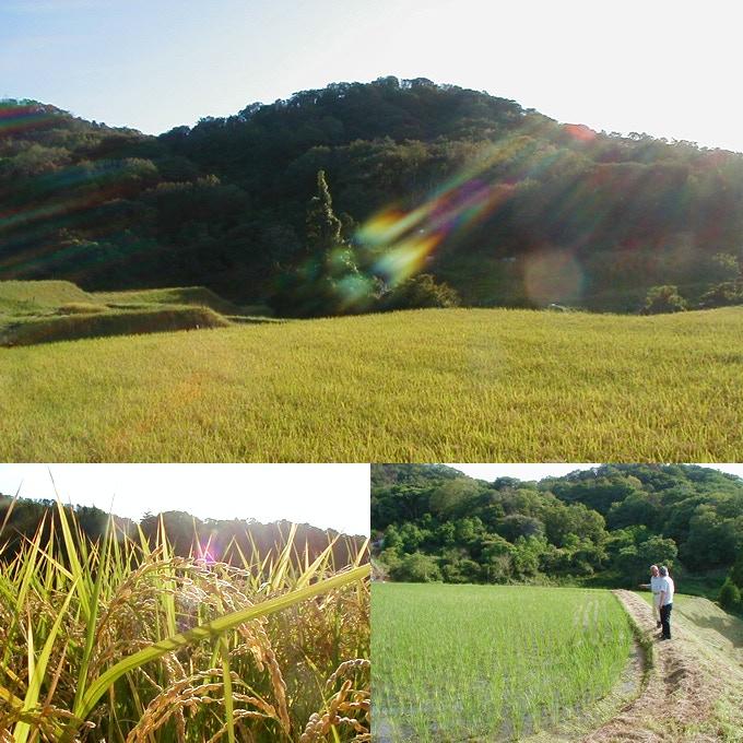 Mr. Tamura explains the growth of rice.