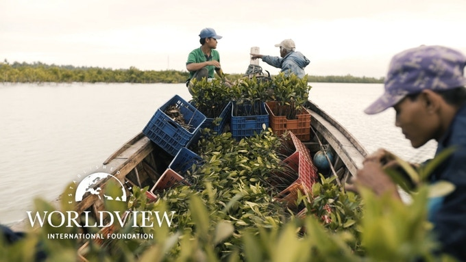 We will plant mangrove trees with World View International Foundation