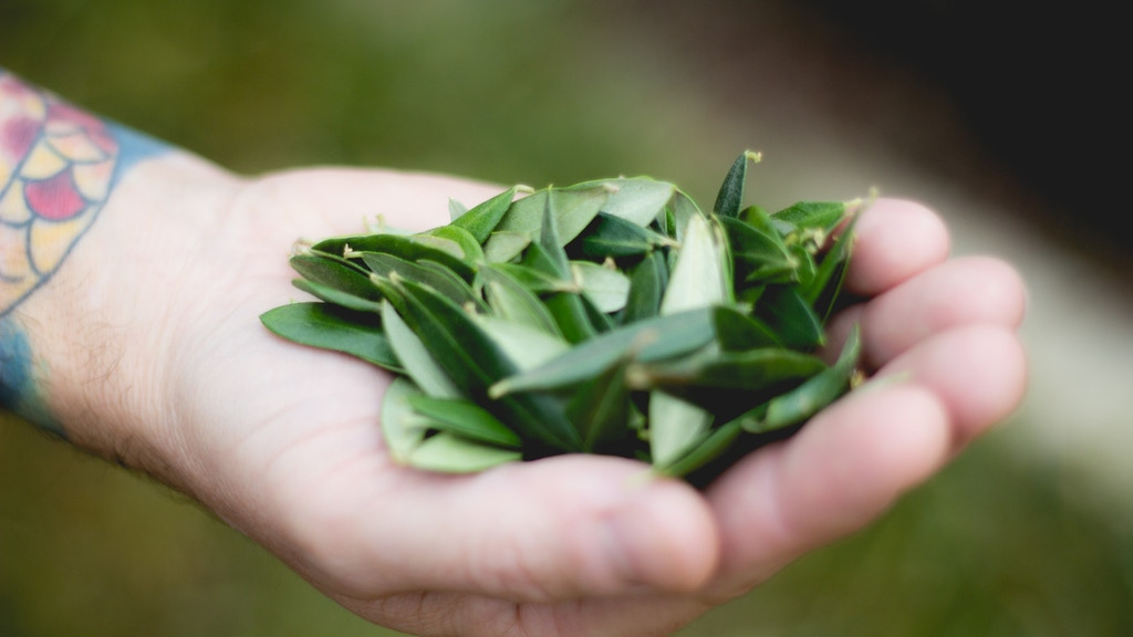 Special Leaf Tea Artisanal Beverage Company Launch project video thumbnail