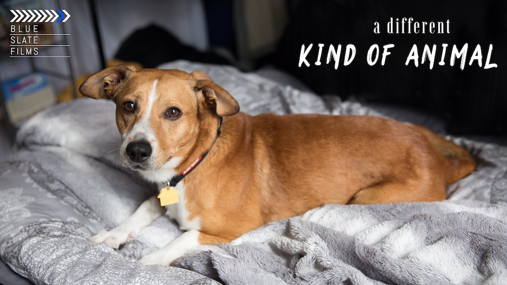 A Different Kind of Animal: A Short Film project video thumbnail