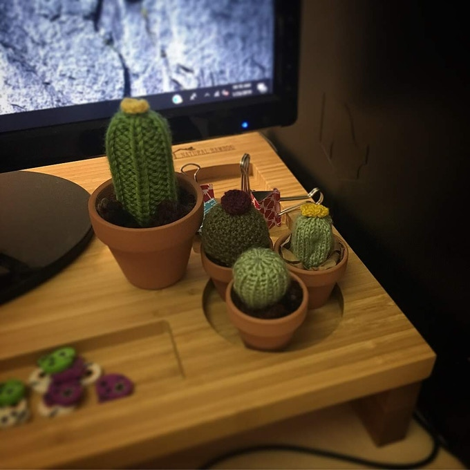 Office Cacti! (Mini and Medium)