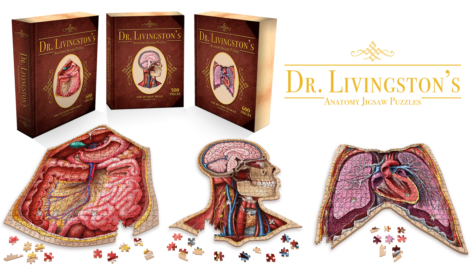 Jigsaw Puzzles Featuring Cross-Sections of the Human Body. Beautiful Medical Illustrations. 100% Accurate Science, 200% Magnification!