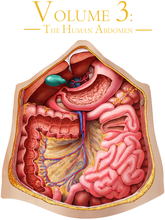 Human Anatomy Jigsaw Puzzles Real Biology Larger Than Life By John
