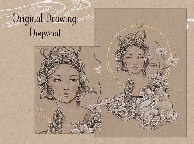 Original Drawing -  Dogwood